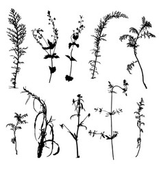 wild plants silhouettes vector image