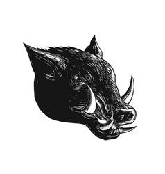 razorback wild boar scratchboard vector image vector image
