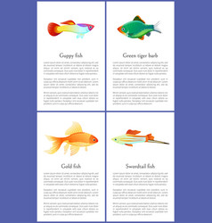guppy gold and swordtail fishes posters vector image