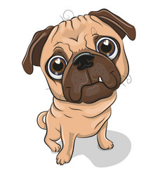 Cartoon pug dog isolated on a white background vector