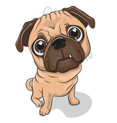 Cartoon pug dog isolated on a white background vector