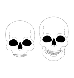 Contour lines skull vector image