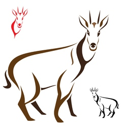 Goral vector image