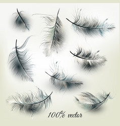 set of realistic feathers vector image