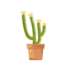 Beautiful potted cactus isolated icon vector