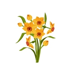 Daffodil Hand Drawn Realistic vector image