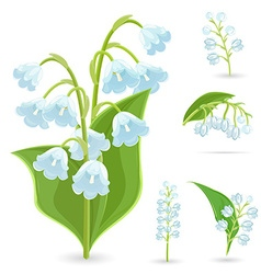 Floral collection of small spring flowers lilies vector