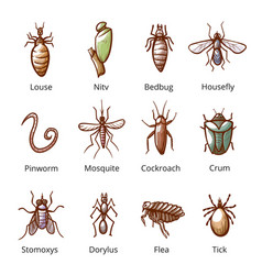insect parasite set with names dangerous pests vector image
