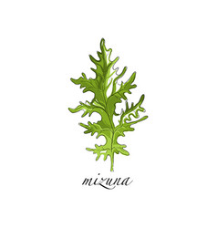 Mizuna fresh culinary plant green seasoning vector
