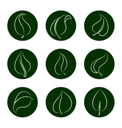 Outline leaves icons on green backgrop vector image