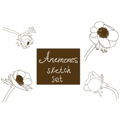 Flower set detailed hand drawn anemones vector image vector image