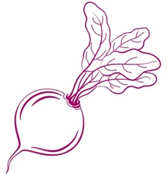 beet with leaves pictogram vector image