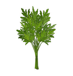 Bunch of parsley hand drawn element objects for vector