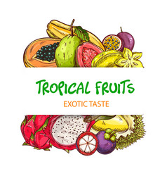 exotic tropical fruits sketch banner vector image