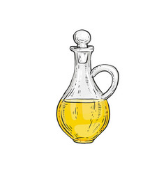 hand drawn bottle olive oil organic food vector image