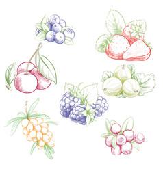 sweet outline berries vector image