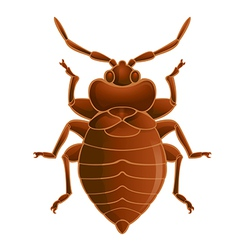 Bedbug vector image