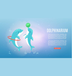 dolphinarium banner inscription underwater ocean vector image