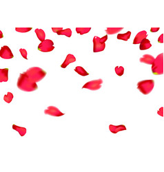 Red sakura or rose falling petals vector