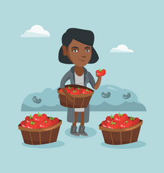 Young african-american farmer collecting tomatoes vector