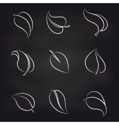 Outline leaves icons on blackboard vector image vector image