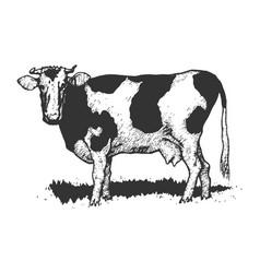 Cow rural farm animal sketch engraving vector