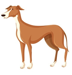 Dog with brown fur vector image