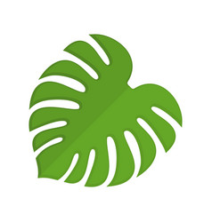 monstera isolated tropical leaves on white vector image