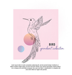 small colibri with typography vector image