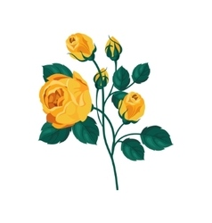 Yellow Rose Hand Drawn Realistic vector