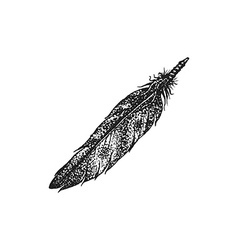 hand drawn indian feather vintage vector image