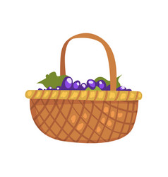 Bunches grape in wicker basket winery vector