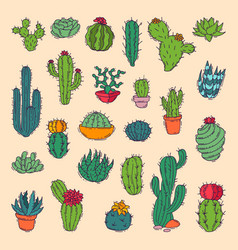 cactus home nature of green vector image