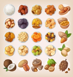 Colorful set of dried fruit and nuts vector