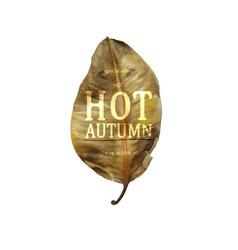 hot autumn sale banner vector image