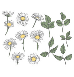 Set of hand-drawn floral elements in sketch style vector