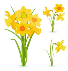 collection bouquet of daffodils spring flowers for vector image