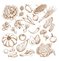 Sketch isolated vegetables icons vector