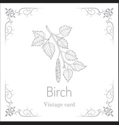 Silver birch branch with green leaves vector