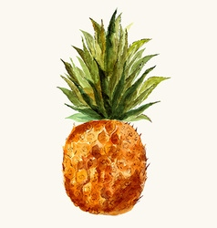 Pineapple watercolor vector