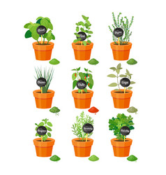 Set useful herbs in brown pots with labels vector