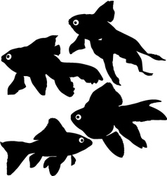 Goldfish or common fish silhouette vector image