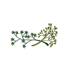 green twigs natural design element for wedding vector image