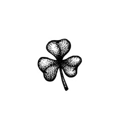 hand drawn shamrock vector image