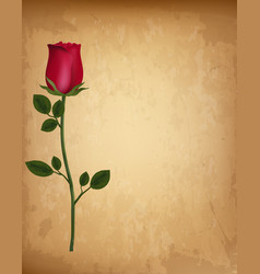 happy valentines day background single red rose vector image