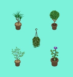 Isometric houseplant set of blossom houseplant vector