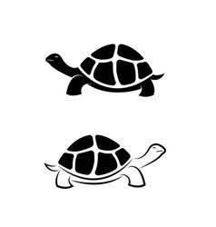 Land tortoise design on white background vector