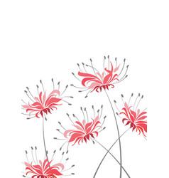 red flower higanbana vector image