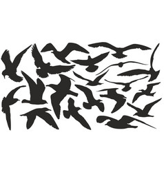 Silhouettes of sea seagulls vector