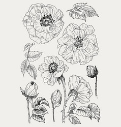 Wild roses blossom branch isolated on white vector